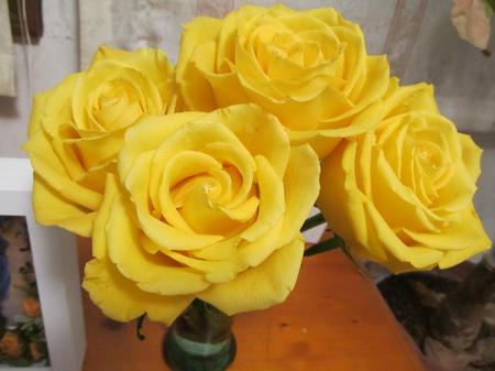 お買い得な黄色いバラ