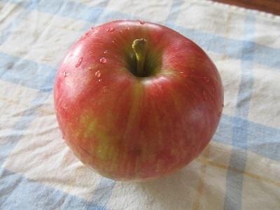 秋のフルーツ3