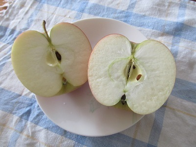 秋のフルーツ1